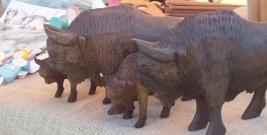 Pumcajs i Purpurka to nowe imiona ochrzczonych w sobotę żubrów (ZDJĘCIA)