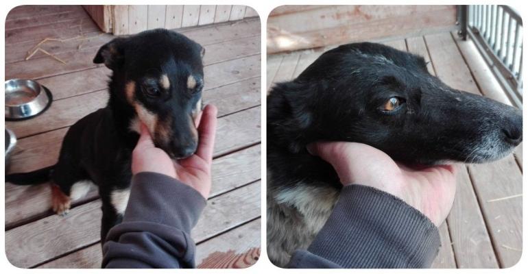 Psy porzucone w lesie. Kryminalni szukają właściciela (FOTO)